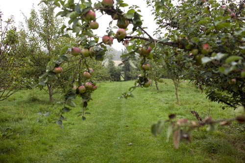 ÆBLER 7162