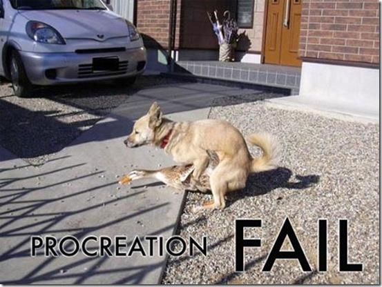 fail (41)
