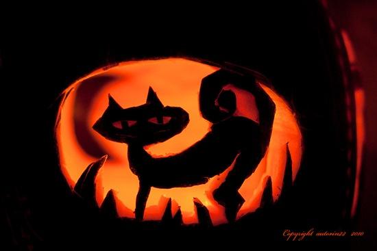 janes_halloween_kitty