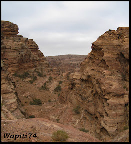 Jordanie : au pays des Nabatéens, des Grecs, des Croisés... et de Dame Nature ! 202%20Petra