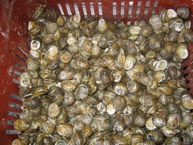 chania market snails