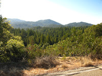 Big Basin Redwoods State Park 004.JPG Photo