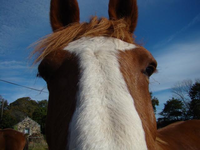 Vos plus belles grimaces de cheval et photos gag .... - Page 6 DSC00892