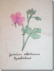 Heikes Garten 07