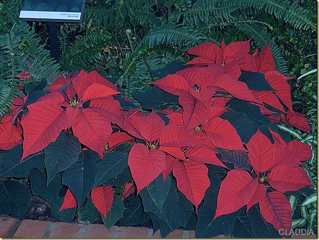 ChristmasPhipps2008 022