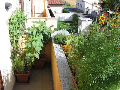 Progetto irrigazione per balcone forum di - Irrigazione balcone ...