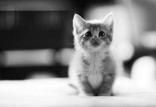 bw-kitten