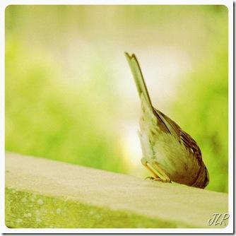 BirdyButtFinal