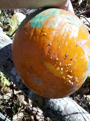 Pumpkin 2 was missed