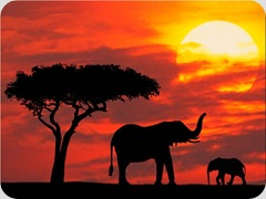 Silhouetted_Kenya