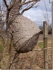 nido de cabachui