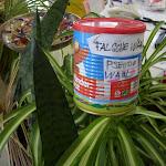 Bockwurst auf Zimmerlilie (aka Beamtengras)