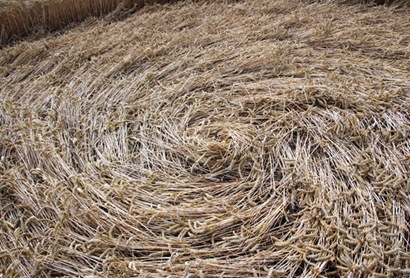 cercuri in lanuri 8