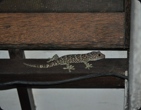 GeckoE