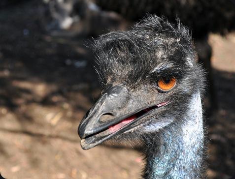 emusm