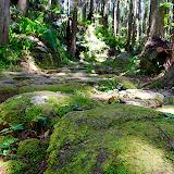 苔が綺麗な石畳