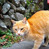 高尾山の猫、孝雄さん(勝手に命名)
