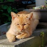 「よう兄ちゃん」@金沢の猫