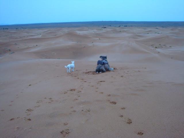 Jana com um camelo no Deserto em Marrocos