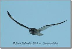 May19-owl_0157