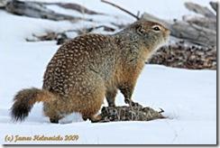 Squirrel2_3574