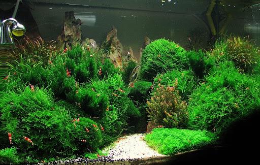 Aquarium Scape : How to scape a corner aquarium??? - Aquascaping - Aquatic Plant ...