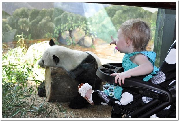 EC panda 2