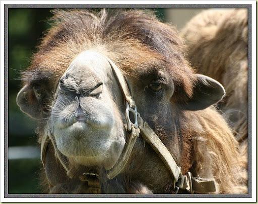 funny animals. Funny animals (Part 1)