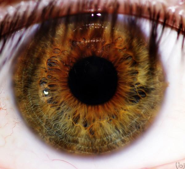 Глаз человека при увеличении