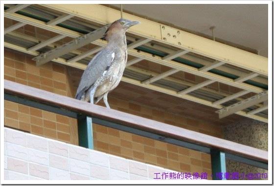 Yi-Zai-elementary-school10