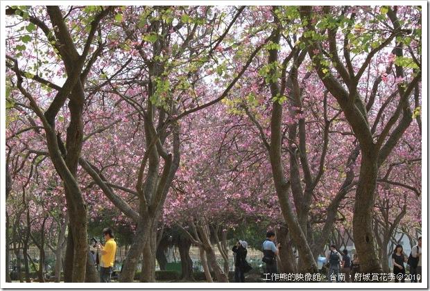 Tainan_Park_flower05