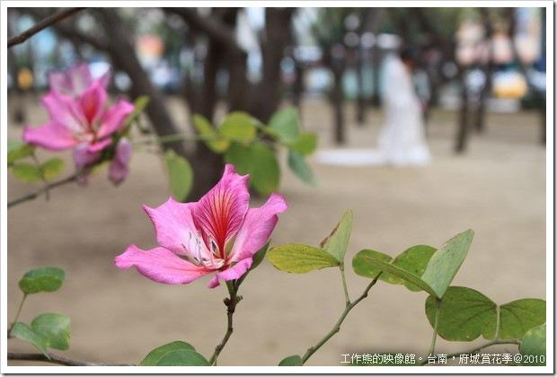 Tainan_Park_flower06