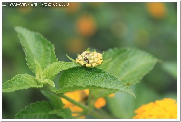 Tainan_Park_flower19