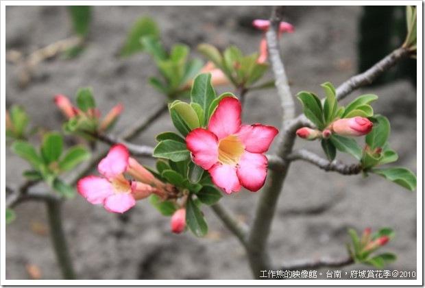 Tainan_Park_flower13