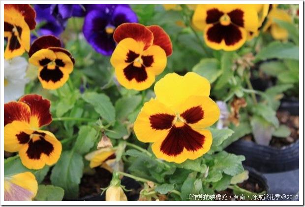 Tainan_Park_flower08