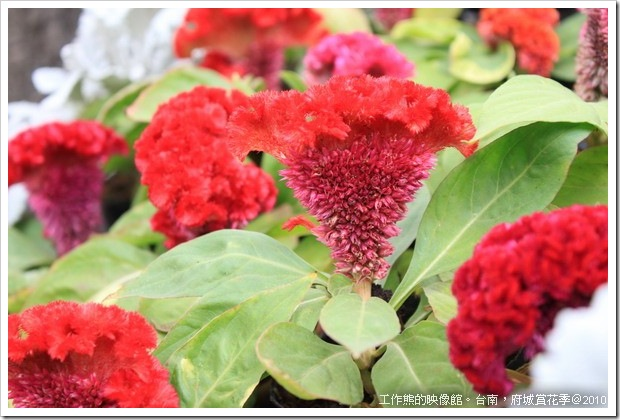 Tainan_Park_flower12