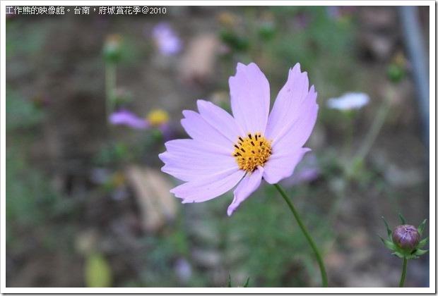 Tainan_Park_flower30