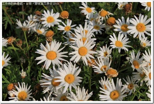 Tainan_Park_flower31