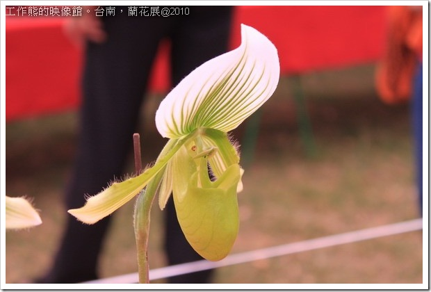 Tainan_orchid05