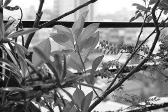 Canon500D_Monochrome02