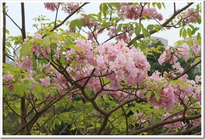 tainan_flower04
