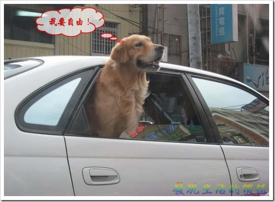 dog_in_car03