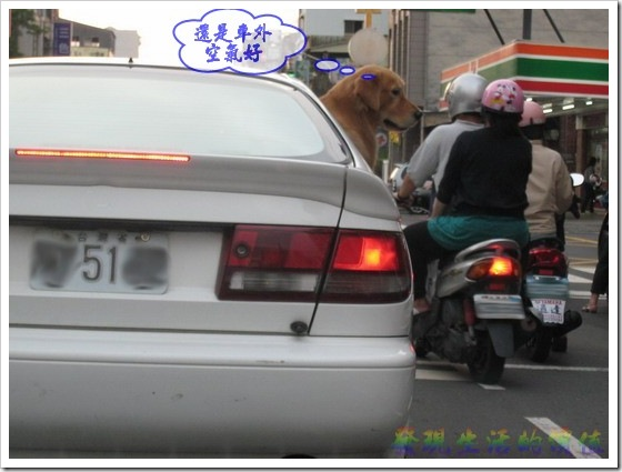 dog_in_car02