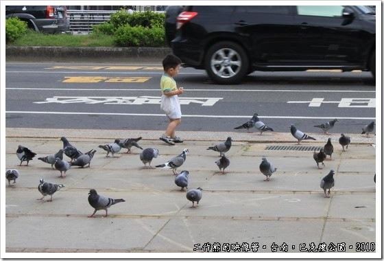 巴克禮紀念公園前偶而會有人餵食鴿子,看這些鴿子應該已經很習慣這樣子與人親近了,一點都不怕人。