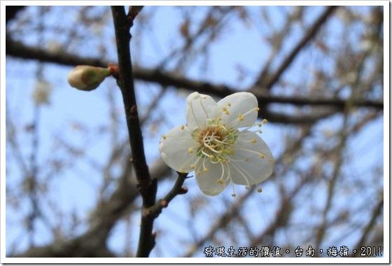 plum_blossom04