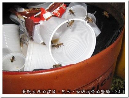 巴西垃圾桶旁的蜜蜂