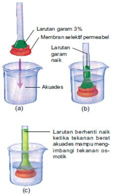skema osmosis