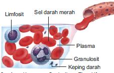 komponen darah