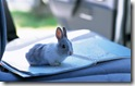 rabbit 20 desktop widescreen wallpaper