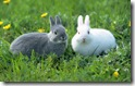 rabbit 12 desktop widescreen wallpaper